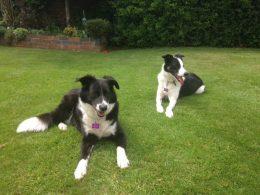 Dog Home Boarding Barnsley