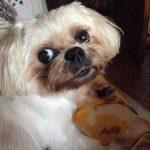 Mitzi PetStay dog