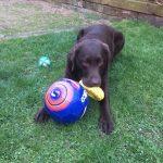 Oscar at PetStay Leeds