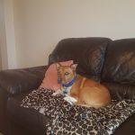 Rio - PetStay Huddersfield