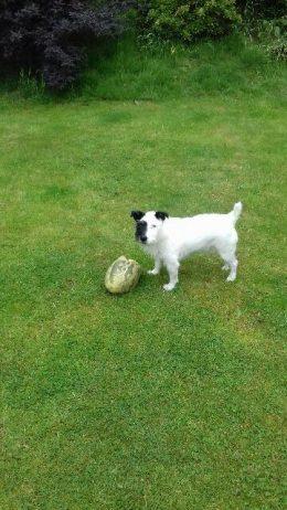 Home Dog Boarding Huddersfield