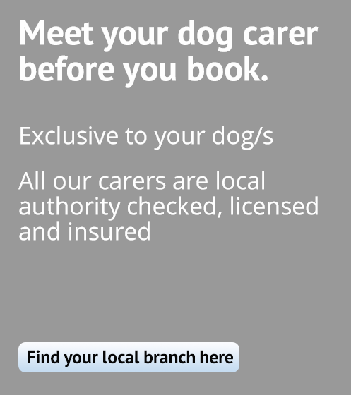 Meet your dog carer before you book