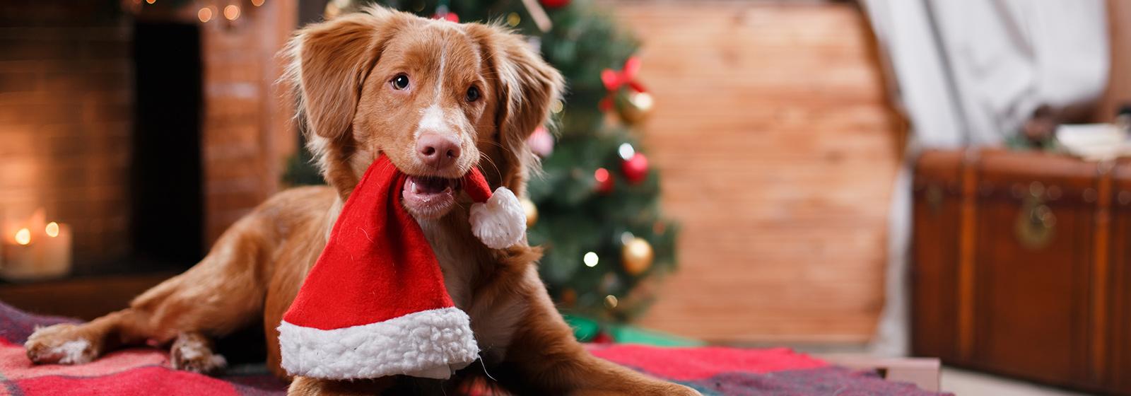 A PetStay Christmas