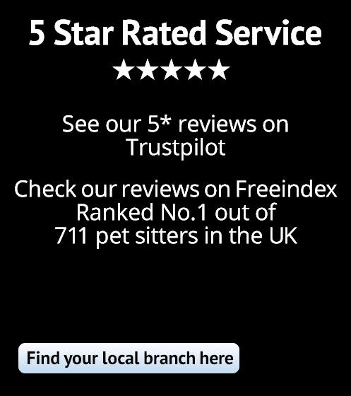 5 Star Dog Sitters