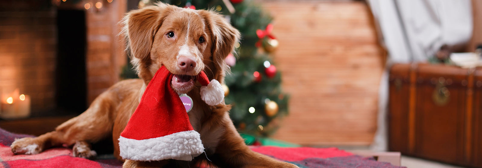 Merry Christmas 2019 from PetStay