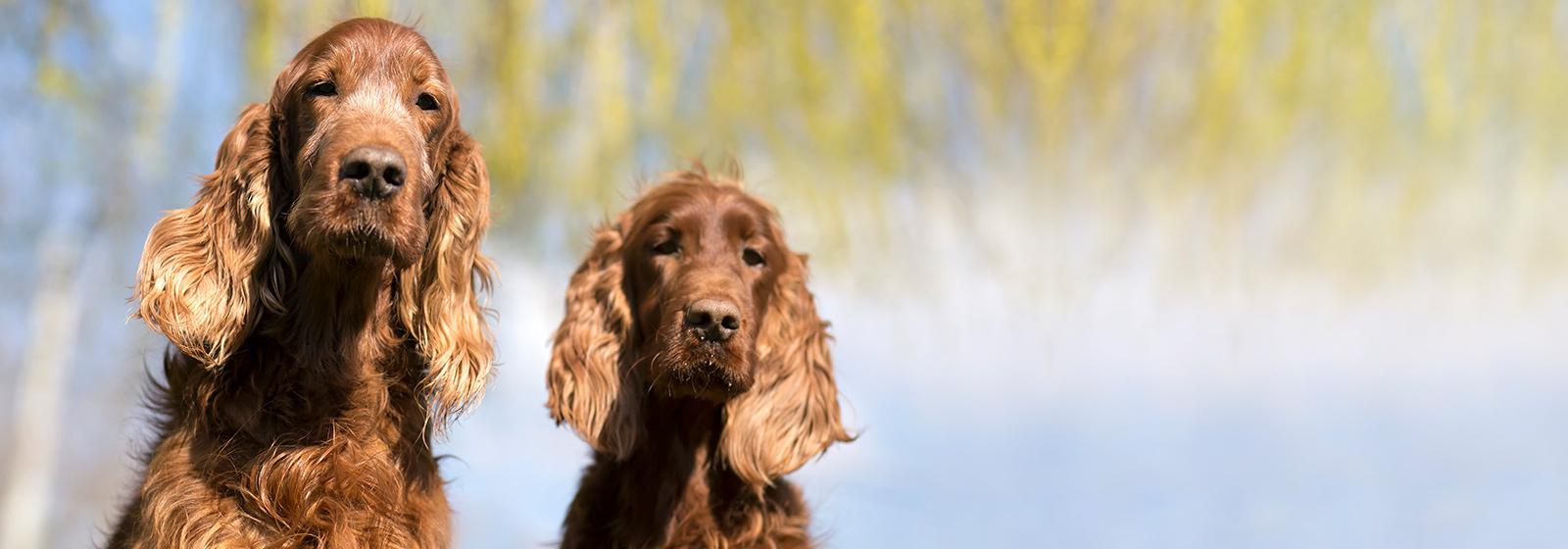 PetStay - Home Dog Boarding